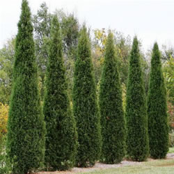 Ornamental Shrubs and Trees