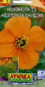 Garden Flowers Wind Poppy, Stylomecon heterophyllum photo orange