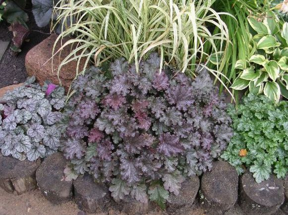 Des plantes de jardin heuchera fleur de corail cloches for Plantes decoratives jardin